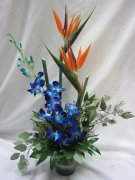 Birds of Paradise blue Orchids,