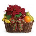 Christmas Fruit & Poinsettia Basket